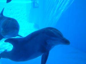 dolph1yoga